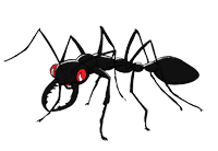 Bullant Cartoon Black